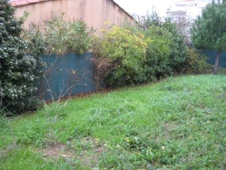 Nouveau jardin janvier 2009 petitesfleurs for Cuisine qui donne sur le jardin